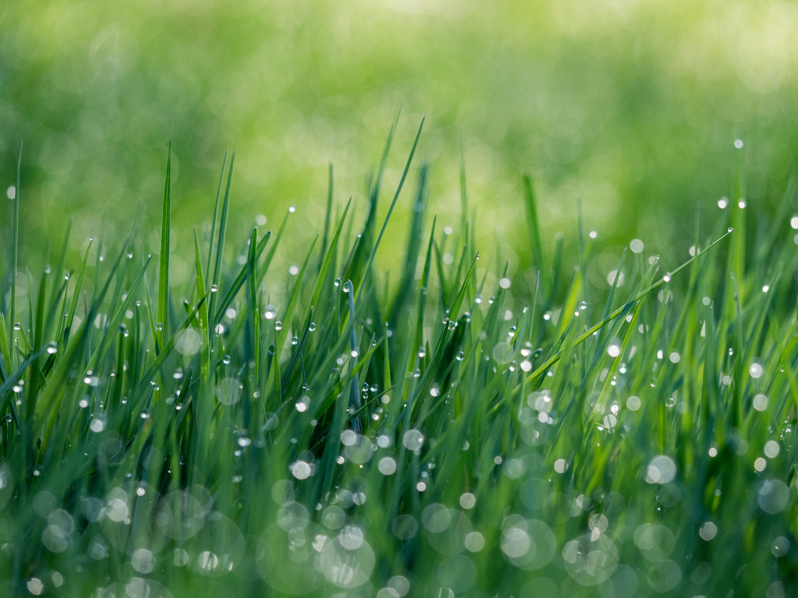 Lawn Fertilization: How and When to Feed your Lawn