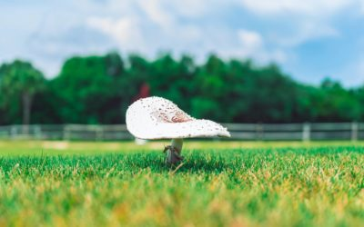 Mushrooms in Your Lawn: What You Need to Know